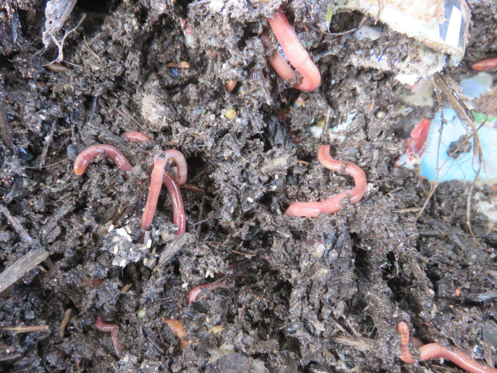 worms in my earth worm filter this morning