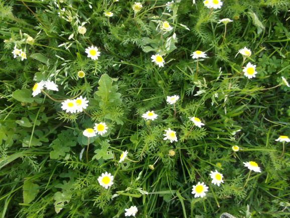 flowers in the lawn of a local park