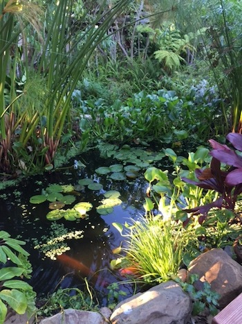 Inspiring, my sister's natural pond in California