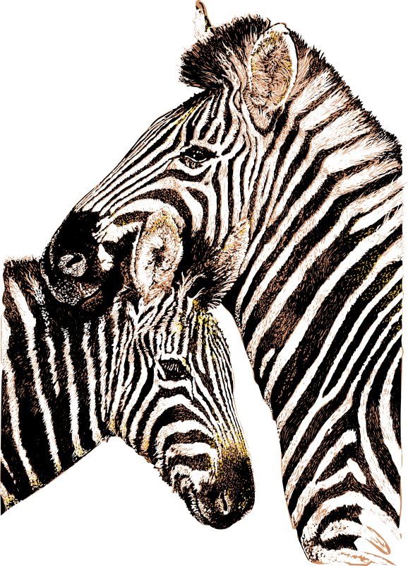 Zebra mother and child in three colours