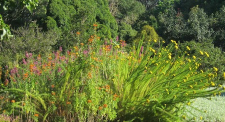 Kirstenbosch showing the way for water-wise gardening with a burst of warm colour
