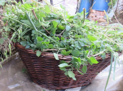a free harvest of green plant food