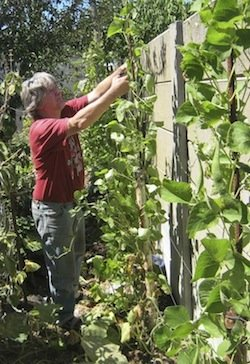 does your vegetable garden planner include walls ?