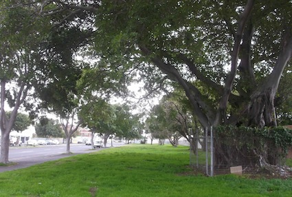 green ribbons along the major arteries give a place to walk the dog, and somewhere for the homeless to camp