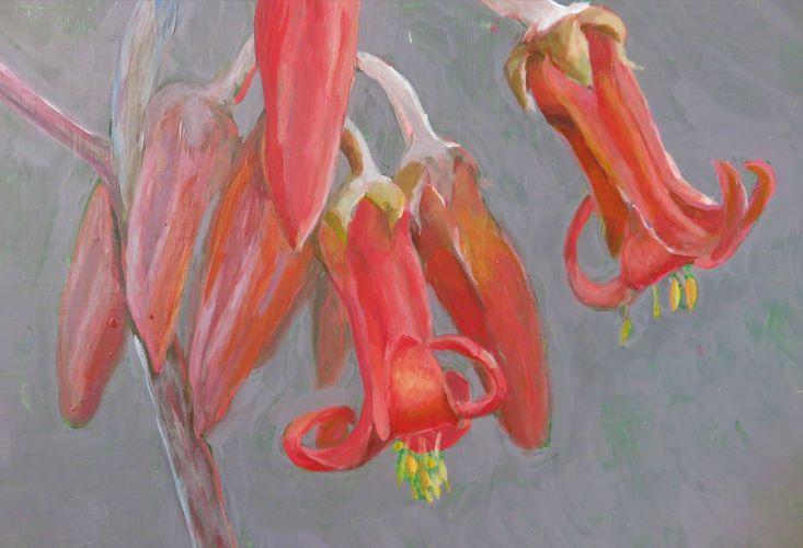 tiny bells of succulent