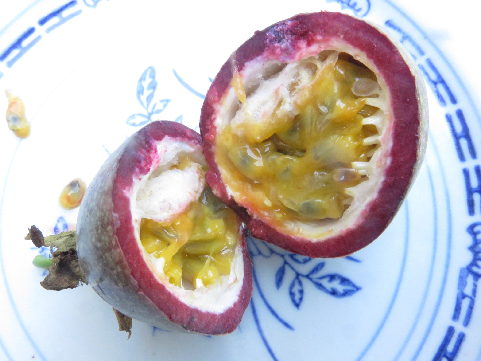 Passion fruit grow well from fresh seed.