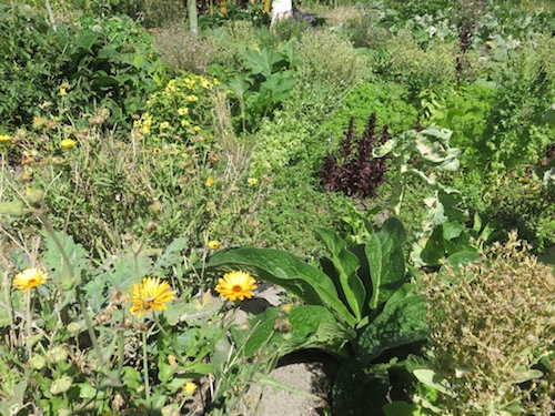 flowers for bees and pests, mulch plants and seeding vegetables