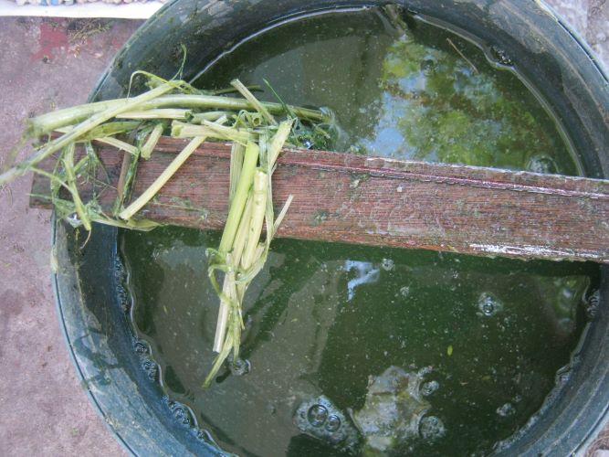 liquid plant manure