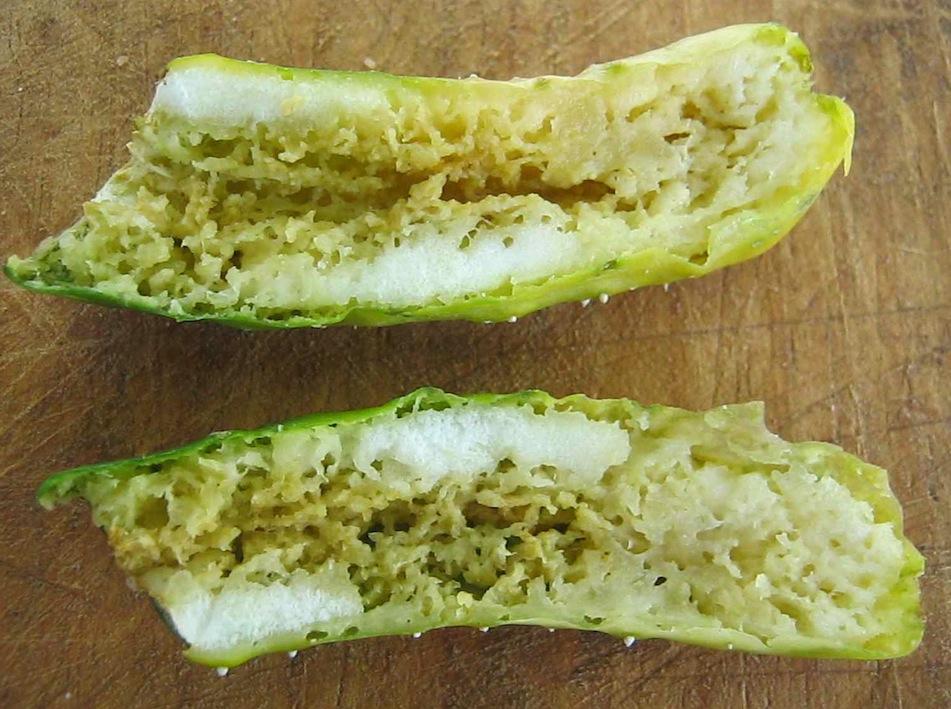 Fruit damage due to cucumber fruit fly larvae.