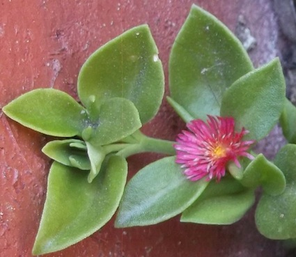 flower starred lawn
