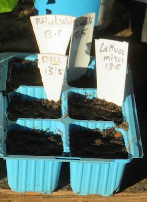 Lettuce seeds sown and watered in. A simple job