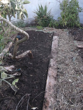 vegetable beds laid quickly and effectively without tillage