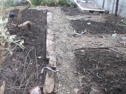compost mulch on beds, olive branches on paths