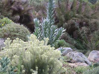 how to conserve water by changing to Fynbos colours