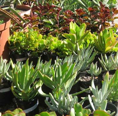 some of the materials of water-wise Mediterranean gardening