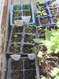 high water use vegetable seedlings