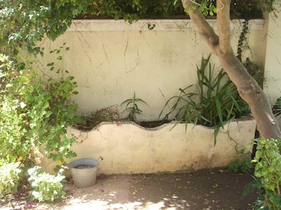 a sinuous wall planter at Irma Stern museum.