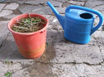 making liquid manure or jauche is easy. follow the links at the bottom of the page.