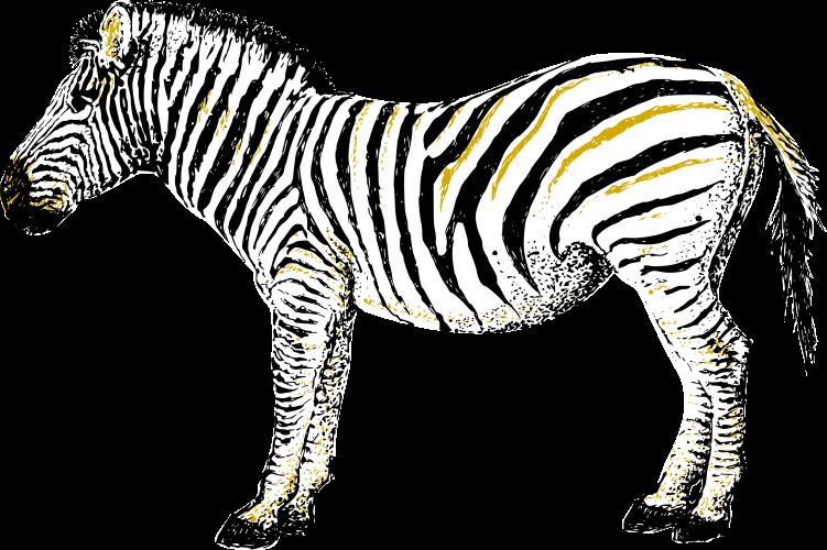Zebra are increasing again in Namibia.